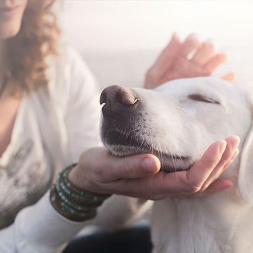 Entspannter Hund wird gestreichelt